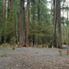 Golden Trout Campground
