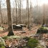 Camp Avery @ Clark Shack Acres
