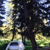A Black Hills Beauty - Camping!