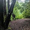 Redwood Mushroom Knoll