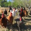 SHAMBA - Permaculture Farm Campsite