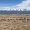Mt. Blanca Camp
