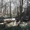 Sol duc Rainforest hide out camp 3b