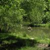 Kinderhook Hollow 3000' Brook/Ponds