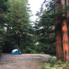 Sleep Tight Under Towering Redwoods