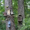 Bird Camp @ AWPW