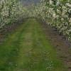 Apple ranch w/ Mountian Views