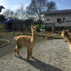 Alpaca Your Bags Camp or RV parking