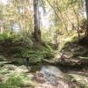 Babbling Bates Creek Vintage Camp