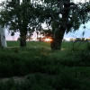 Cottonwood Tree Camp