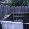 49er Homestead Rustic Site