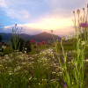 Camp Chicory in Paradise Valley