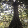 Leaning Tree Homestead