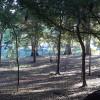 Campsite 1 on the Santa Fe River