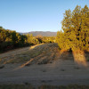40 Aker Wood Ranch
