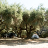 Sunrise Farms Olive Grove