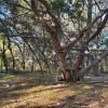 Woodland Magic primitive camping