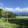 Hamakua Coast Farm - Ocean Views