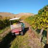 Cheval Cellars Wine Camp BnB