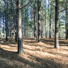 Pine Forest Tent Sites Walk-in