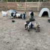 Goat House Farm Glamping