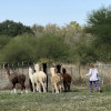 Cozy Cottage for 2 at Alpaca Ranch
