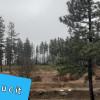 Black Pines Goldendale Washington