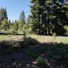 Nicky's Camp Site
