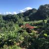 Hawaiian jungle escape -4WD