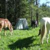 Camping With Your Horse Trailer