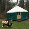 Yurt @ Yorkie Acres Goat Farm