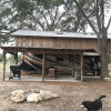 Live Oak Cove ( covered barn)