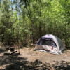Tent Near Forest and Amenities