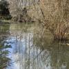 Pond Site 5