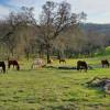 Meadow View - Equestrian Campsite