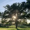 Oak Grove Campsite - Tent Site