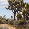 HighDesert WildernessRanch-PERSONAL