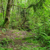 A Cozy Spot Under the Cedars Site 7