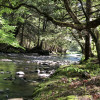 Taino Woods River Sites Only
