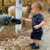 BoPeep Sheep Farm