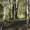 Spring Pond Campsite