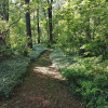 Fern Ridge on Woodside