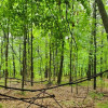 11.2 Acres of Wooded Freedom