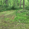 Rustic woods camping/RV field park