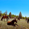 Iron Gate Ranch Platform Campsite