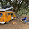 Camping under the oaks