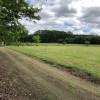 Chappel Hill Tree Farm