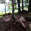 Barakah Farm Sweetfern Campsite