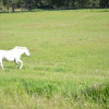 Green Acres Ranch A Place of Beauty