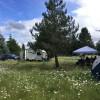 Camp with Alpacas
